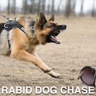 German Shepherd Rabid dog chase