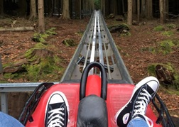 Converse Trainers in view as you hurstle down Forest Coaster