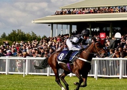 Horse Racing Hereford
