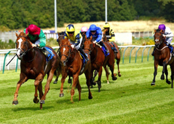 Horse Racing Nottingham