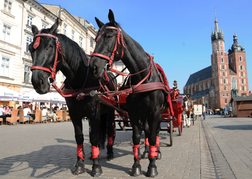 Carriage Horses Krakow
