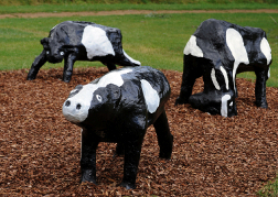 Concrete Cows in Milton Keynes