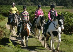 Group Pony Trekking in Bournemouth