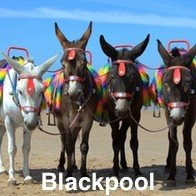 Blackpool Beach Donkeys