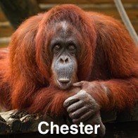 Chester Stag Do